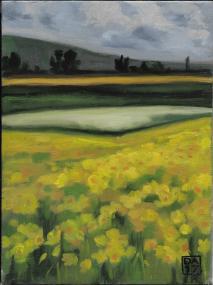 DaffodilFields