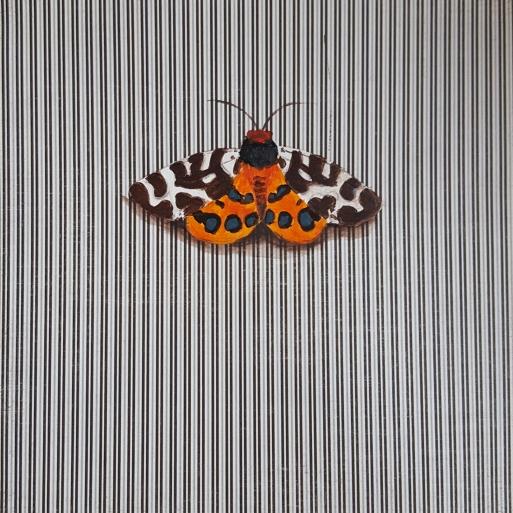 Moth14