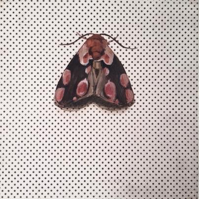 Moth15