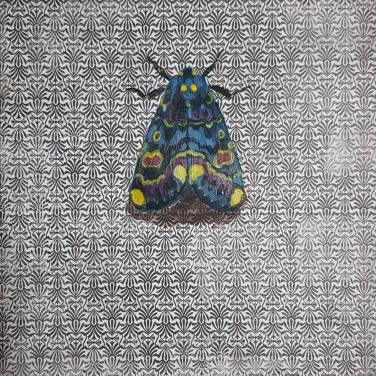 Moth16