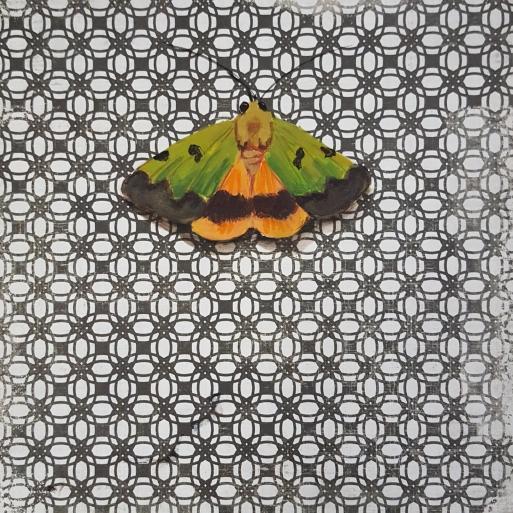 Moth19