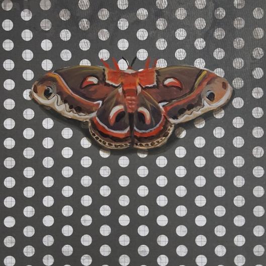 Moth22