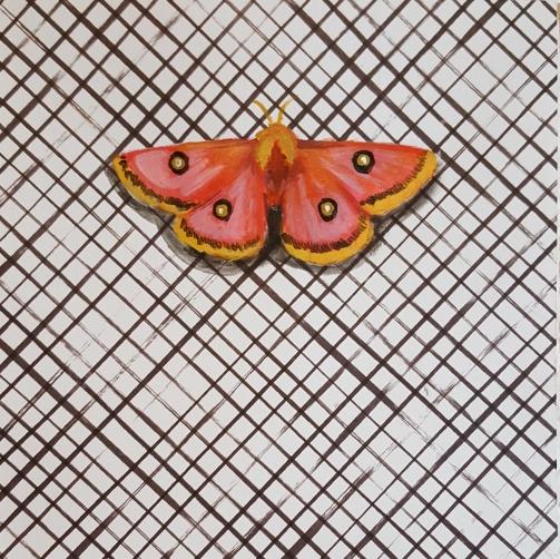Moth26