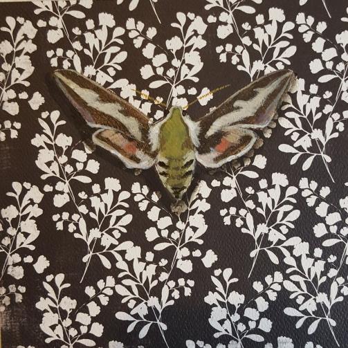 Moth27