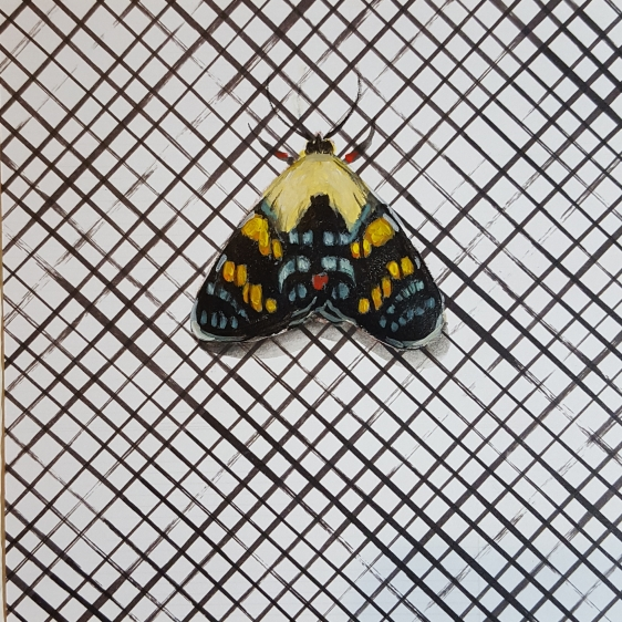 Moth29