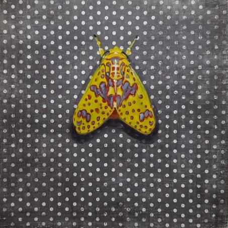 Moth8