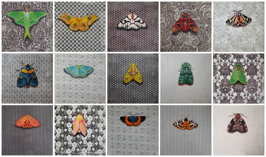 MothCollage2